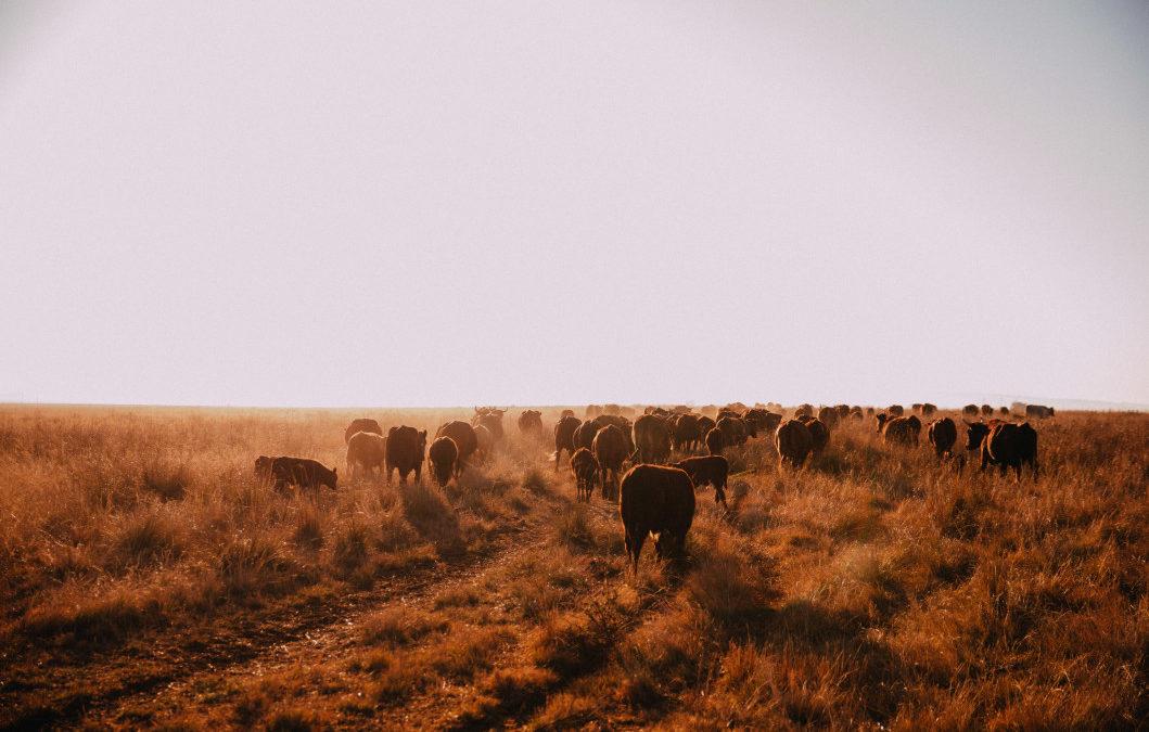 Grassland and Carbon Dioxide