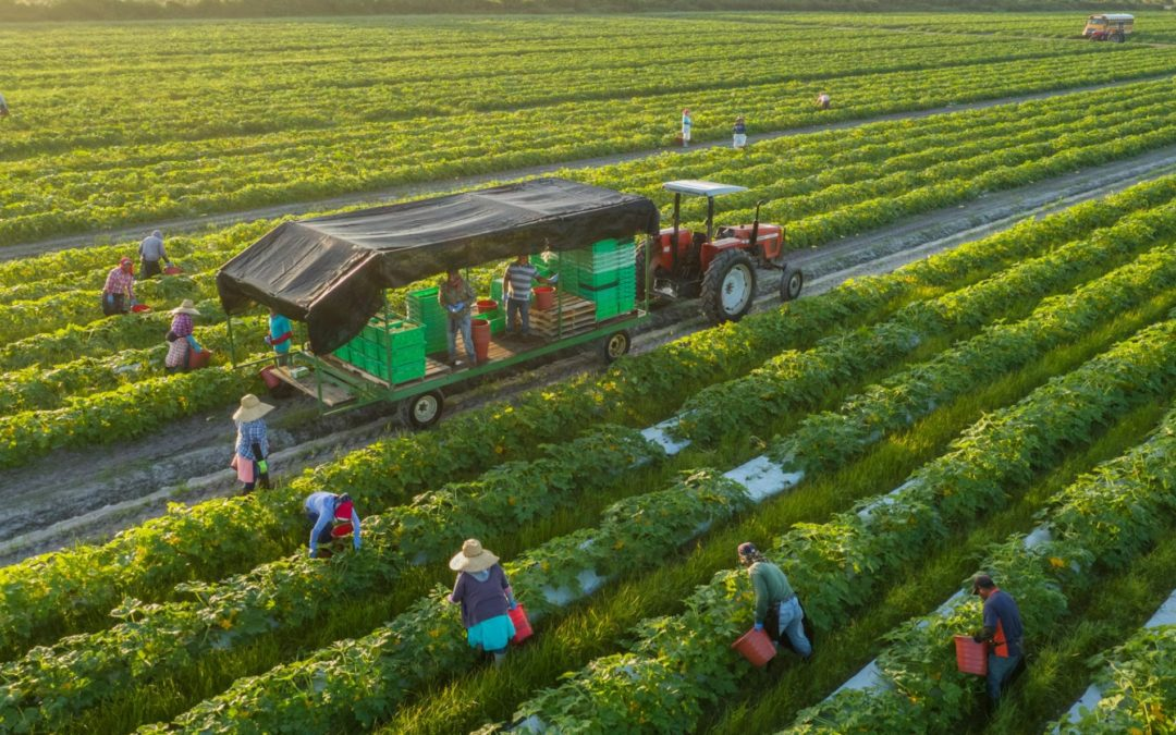 Sustainable Agriculture Takes Root in WA