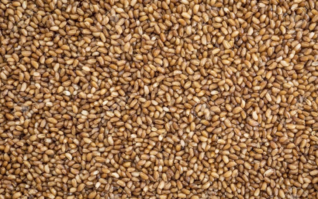 What's teff and Why It's important