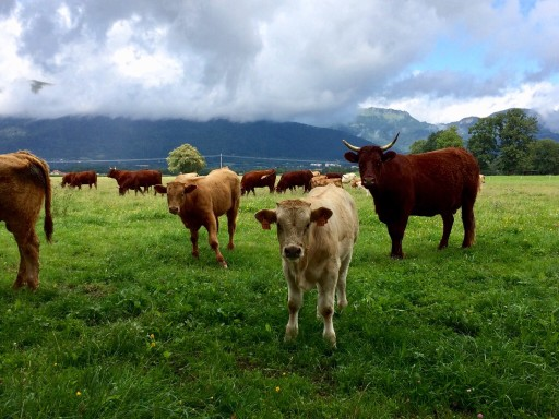Sustainable Agriculture vs Meat Alternatives