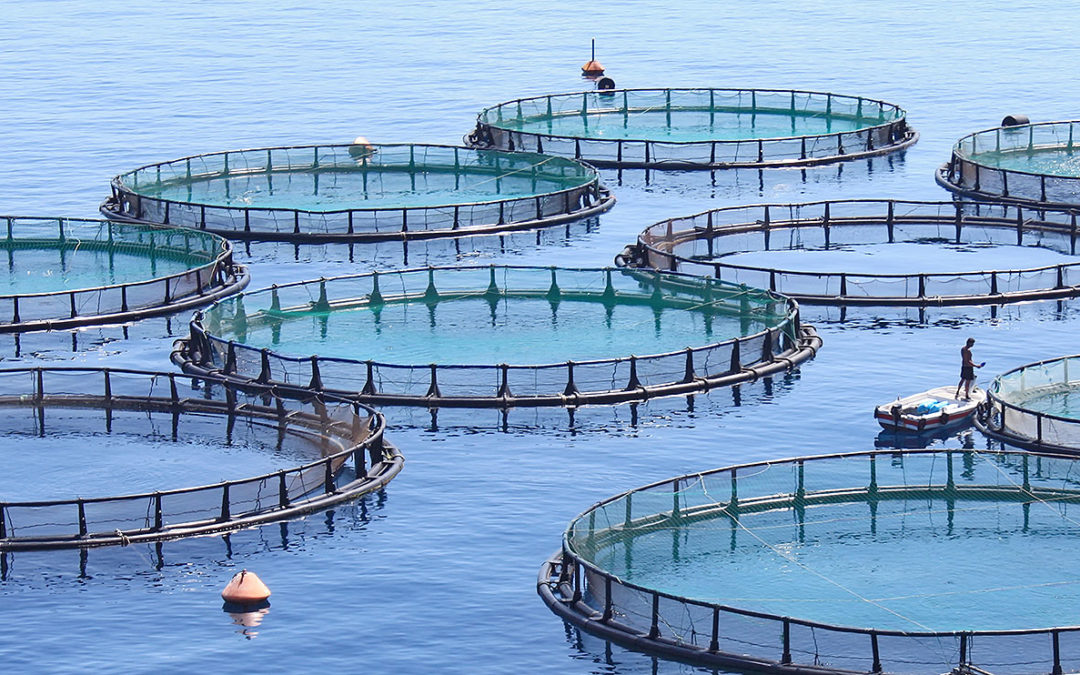 6 Things To Know About Fish Farms