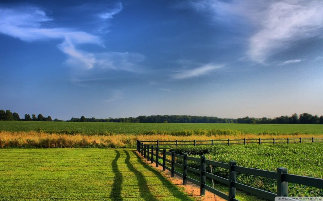 Top 6 Trends in Global Agriculture