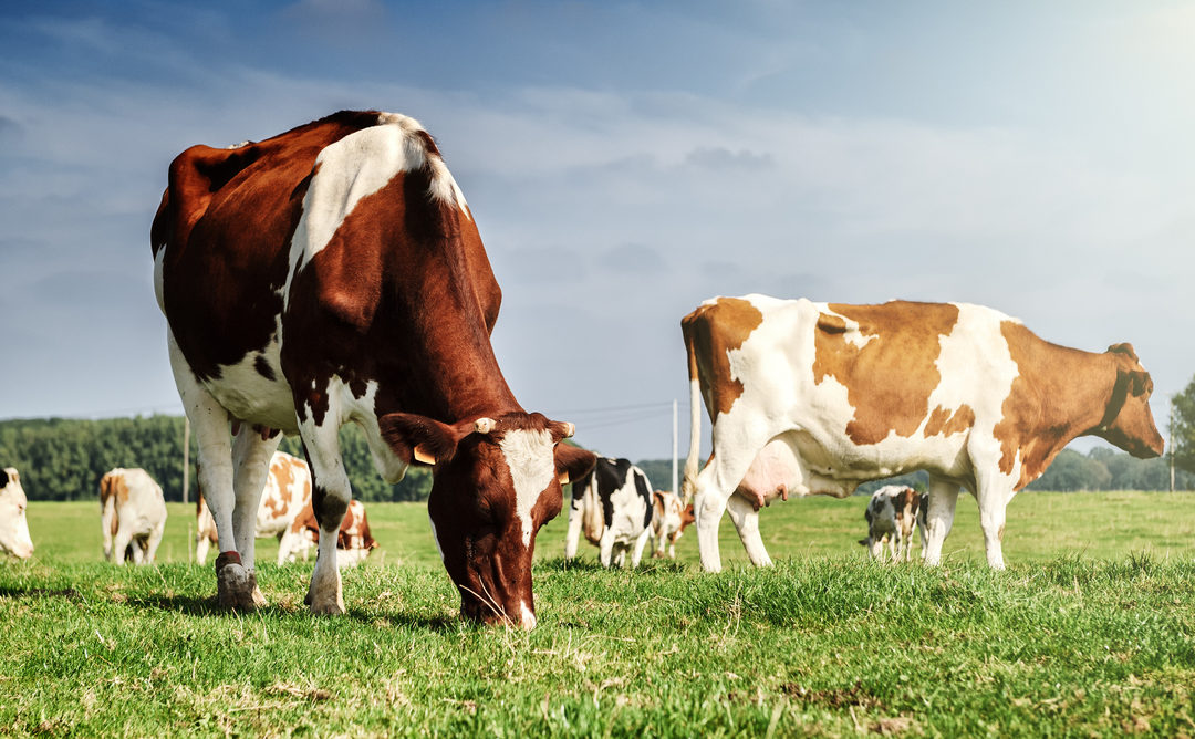 Why you should integrate livestock and plant growing