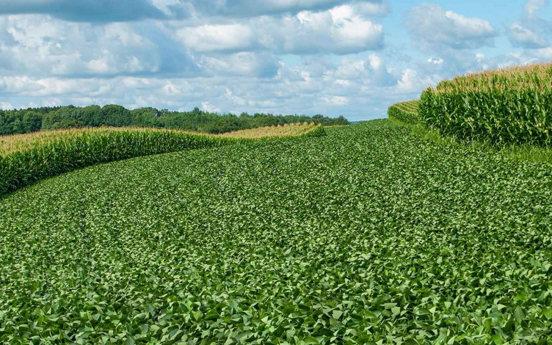 Tips for Adding Animals to Your Crop Rotation