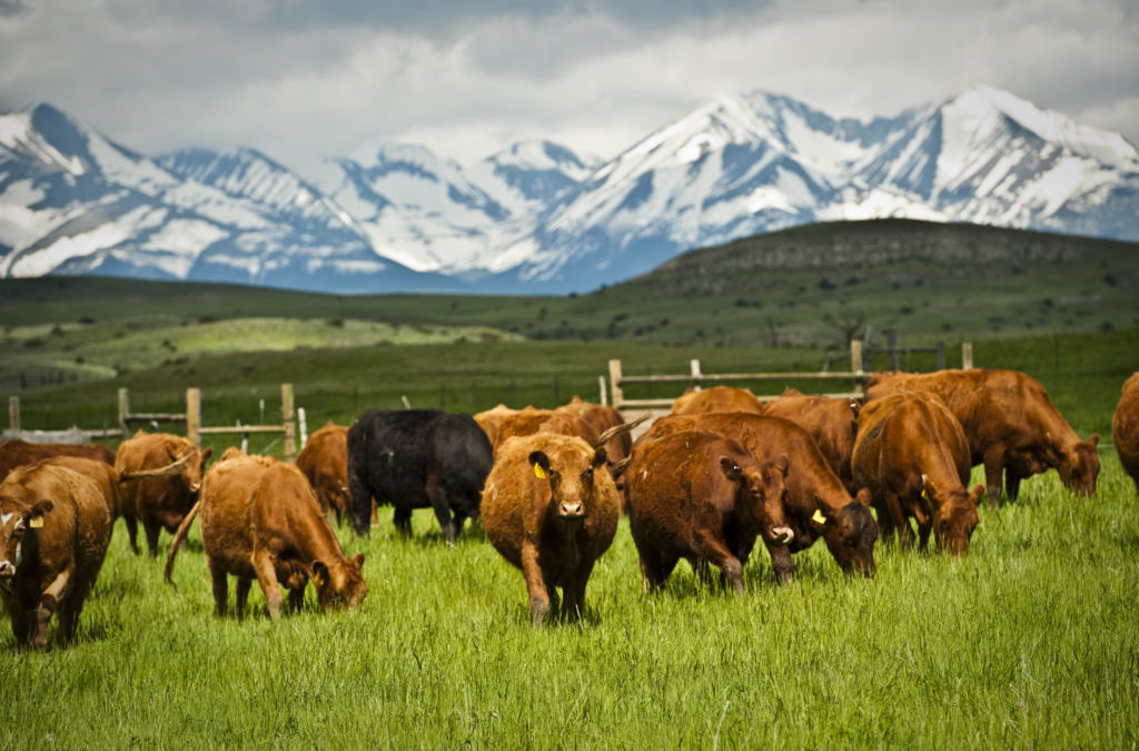High-Intensity Grazing Trial Yields Early Results