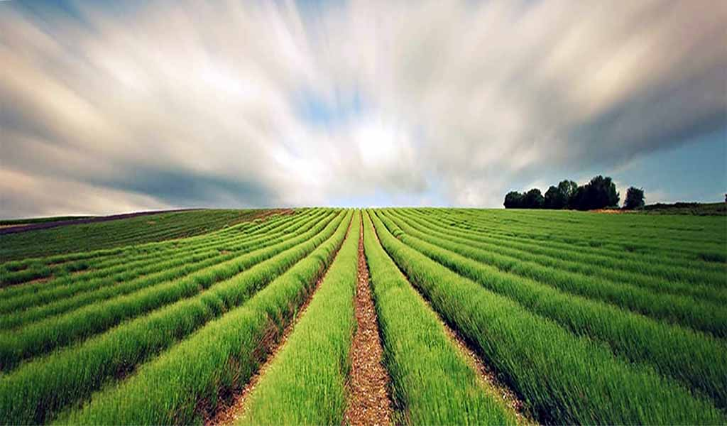 What is Conservation agriculture