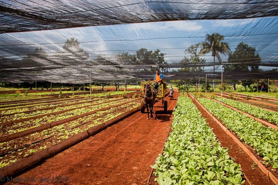 How Sustainable Agriculture has affected the Rivers in Cuba