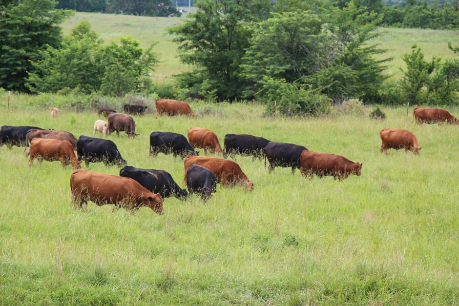 Grazing management principles