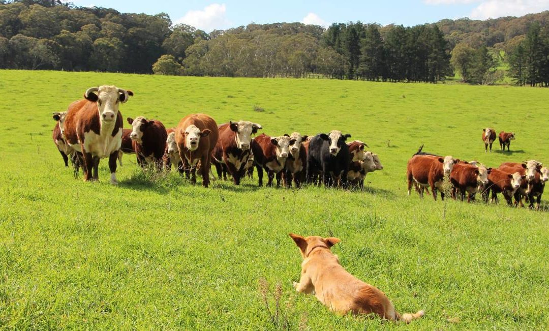 How to Graze Responsibly