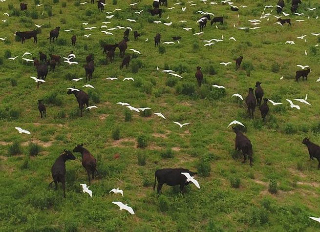 White Oak Pastures